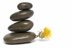 Curative stones and yellow flower. Stock Photos