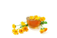Curative tea with calendula Stock Photos