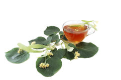 Curative tea from the flowers of linden Stock Photos