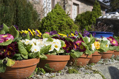Curb appeal border of flower pots. Front gardens, as simple as a row of brightly colored potted flowers, add curb appeal and a pop of color Royalty Free Stock Photo