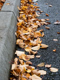 Curbside leaves. Autumn leaves on the road curbside Royalty Free Stock Photo