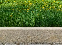 Tall grass and dandelions along the curb stock photos