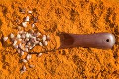 Curcuma con aglio ed il cucchiaio Fotografia Stock