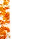 Curcuma, curry e polvere fredda Immagini Stock Libere da Diritti