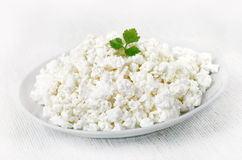 Curd cheese on white plate Stock Image