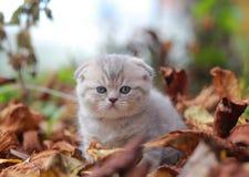 Cure grey kitten sitting among dry stock image