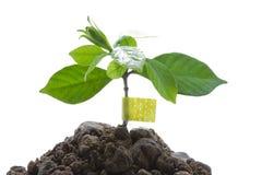 Cure o mundo - proteção de ambiente Foto de Stock Royalty Free