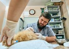 Cure odontoiatriche dei denti di cane alla clinica Immagine Stock