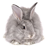 Cure rabbit Stock Images