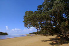 Curio Bay beach scene. Scenic view of Curio Bay and beach, Southland, South Island, New Zealand Stock Image