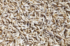 Curio shark teeth for sale. Landscape exterior Stock Images