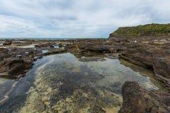 Curio zatoka Catlins Nowa Zelandia Fotografia Stock