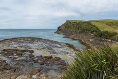 Curio zatoka Catlins Nowa Zelandia Obraz Royalty Free