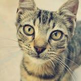 Curios cat Stock Photography