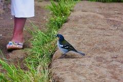 Curiosidad del pájaro Foto de archivo libre de regalías
