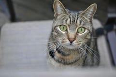 Curiosidad en el nivel del gato Imágenes de archivo libres de regalías