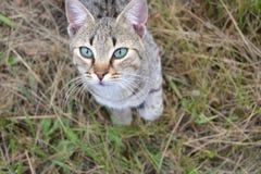 Curiosidade do gato médio imagens de stock royalty free