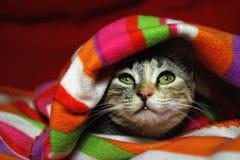 Curiosità del gattino Fotografia Stock Libera da Diritti