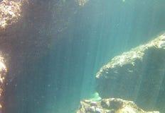 Curiosità subacquea fotografie stock libere da diritti
