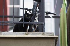 Curiosité aux yeux d'un chat Image stock