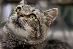 Curiosité de chat Photo stock