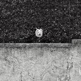 Curiosité du chien blanc Image stock
