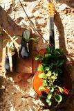 Curiosities in Acre, Akko, boots and shoes, handbags, as flower pots, exterior design and decoration, in Israel stock photo