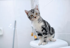 Curiosity cat Stock Photos