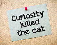 Curiosity killed the cat. Message. Recycled paper note pinned on cork board. Concept Image Royalty Free Stock Photos
