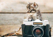 Curiosity kitten with old camera. Curiosity little kitten with old photo camera on wooden background royalty free stock photo