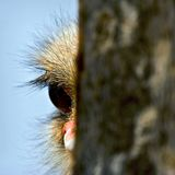 Curiosity ostrich. And question symbol stock photography