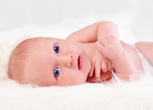 Curioso, duas semanas velho, bebê recém-nascido Imagens de Stock Royalty Free