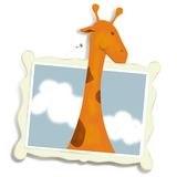 Curiosous Giraffe lizenzfreies stockfoto