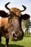 Curious animal Stock Photography