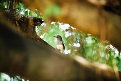 Curious beautiful tropical bird on a branch of  tree, looking i Royalty Free Stock Photos