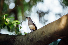 Curious beautiful tropical bird on a branch of  tree, looking i Royalty Free Stock Images