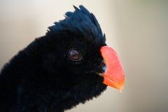 Curious Bird Stock Photos