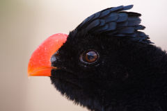 Curious Bird Stock Photography