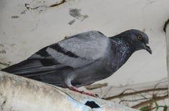 Curious Bird Royalty Free Stock Photo