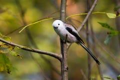 Curious bird Royalty Free Stock Photos