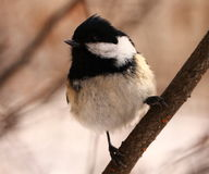 Curious bird Stock Images