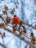 Curious bird sitting on a tree royalty free stock images