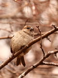 Curious bird Royalty Free Stock Images