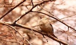 Curious bird Stock Photo