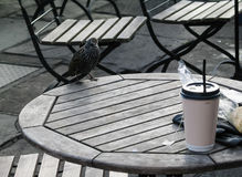 A curious bird on the table in the park Royalty Free Stock Image