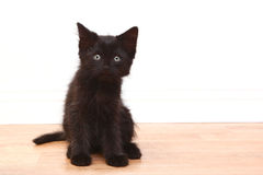 Curious Black Baby Kitten on White Stock Image