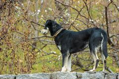 Dog standing over the wall royalty free stock photography