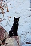 Curious black cat. A curious black cat with intense light brown eyes looking at the camera, in white background, captured in Nisyros island, Greece stock photography