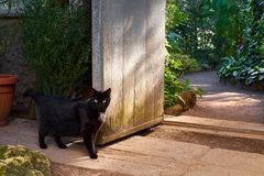 Curious black cat infront of vintage garden doors with bright gr. Een tropical plants on background royalty free stock photos