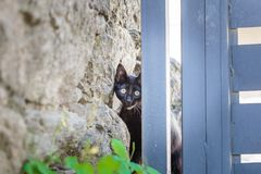 Curious cat peeking out of stone wall. Curious black cat peeking out of stone wall Royalty Free Stock Image